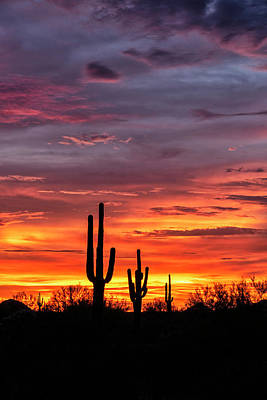 Photograph - Silhoutte Sunset In The Sonoran Part Two  by Saija Lehtonen