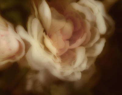 Photograph - Silk Bouquet by Ann Powell