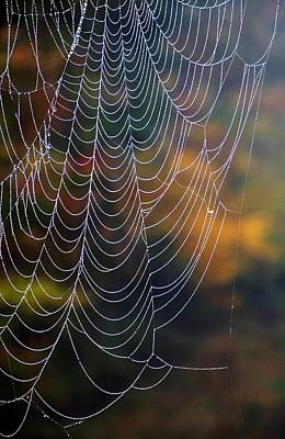 Photograph - Silken Threads by Elsa Marie Santoro