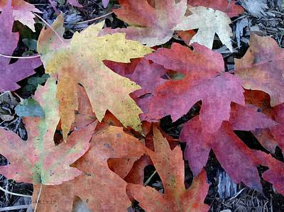 Photograph - Silky Leaves by Kathy Barney