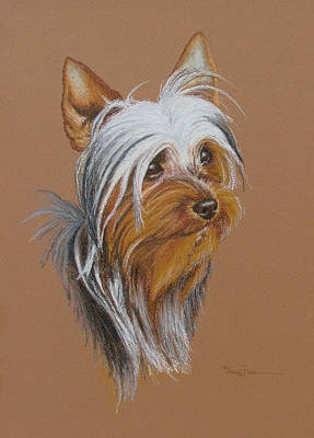 Pastel - Silky Terrier by Mary Dove