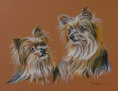 Pastel - Silky Terrier Sisters by Mary Dove