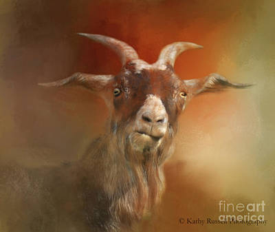 Photograph - Silly Goat by Kathy Russell