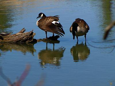 Photograph - Silly Goose by Scott Hovind