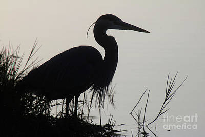 Travel - Silouetted Blue Heron by Jim Beckwith