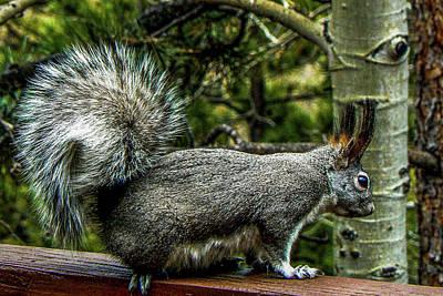 Photograph - Silver Abert's Squirrel by Marilyn Burton