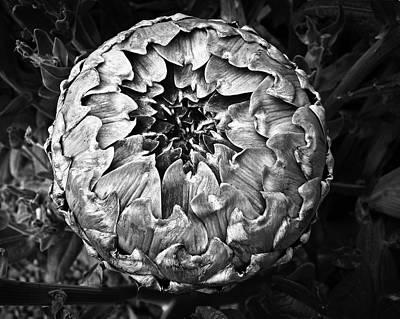 Photograph - Silver Artichoke by Nareeta Martin