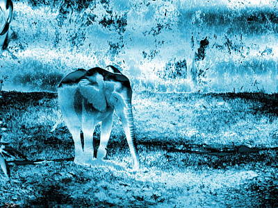 Animal Photograph - Silver Blue Baby Elephant by Abstract Angel Artist Stephen K