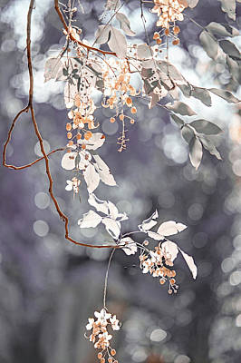 Photograph - Silver Beauty.  Nature In Alien Skin by Jenny Rainbow