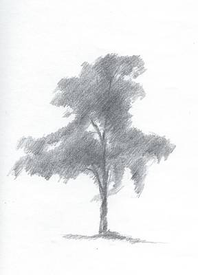 Sketch Painting - Silver Birch Drawing Number One by Alan Daysh