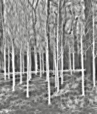 Dunham Massey Digital Art - Silver Birch Dunham Massey Five by Mo Barton