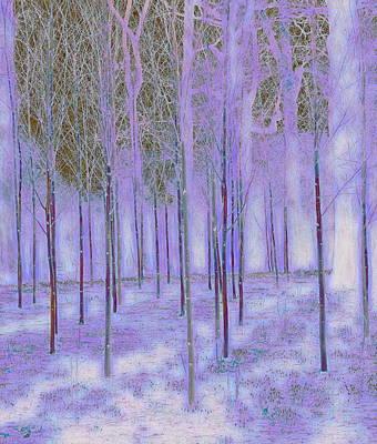 Dunham Massey Digital Art - Silver Birch Dunham Massey Three by Mo Barton
