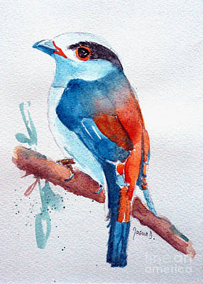 Broadbill Painting - Silver Breasted Broadbill  by Jasna Dragun