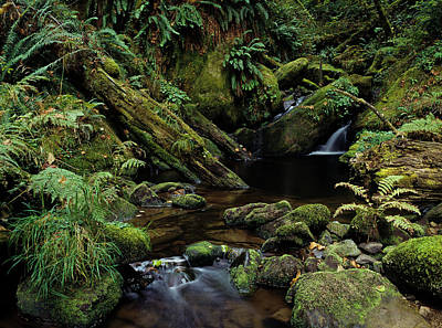 Photograph - Silver Creek And Moss by Robert Potts