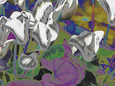 Photograph - Silver Cyclamen by Stephanie Grant