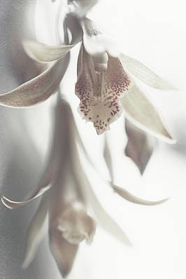 Photograph - Silver Echo by Jenny Rainbow