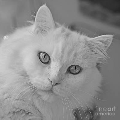 Photograph - Silver Eyes by Joshua McCullough
