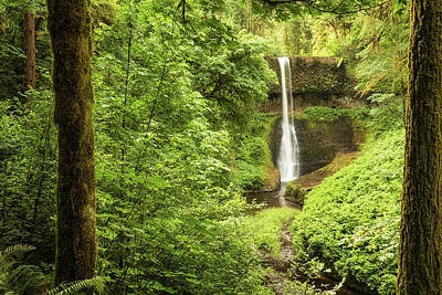 Photograph - Silver Falls Through The Trees by Mary Jo Allen