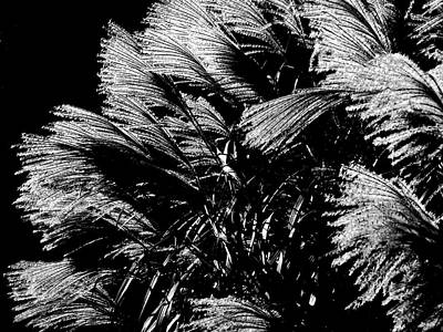 Photograph - Silver Feathers by Rod Stewart