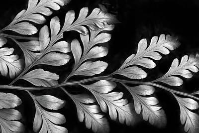 Photograph - Silver Fern by Jessica Jenney
