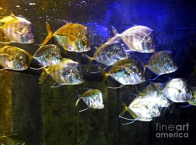 Photograph - Silver Fish by Anne Sands