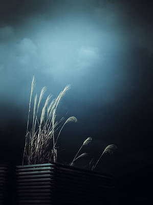 Photograph - Silver Grass Lightning by Rachel Mirror