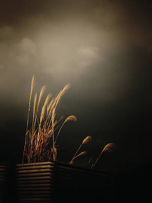 Photograph - Silver Grass by Rachel Mirror