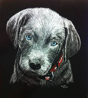 Scratchboard Painting - Silver Lab Beauregard by Lisa Baker