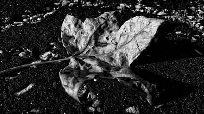 Photograph - Silver Leaf by Nathan Little
