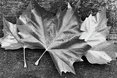 Photograph - Silver Leaves by Mihaela Pater