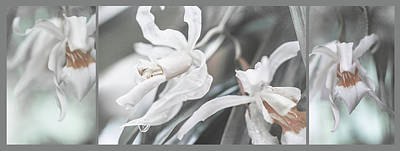 Photograph - Silver Melody. Triptych by Jenny Rainbow