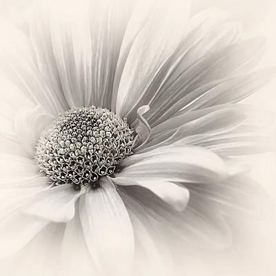 Photograph - Silver Mist by Darlene Kwiatkowski