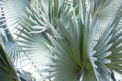 Photograph - Silver Palm Leaf Abstract by Debbie Oppermann