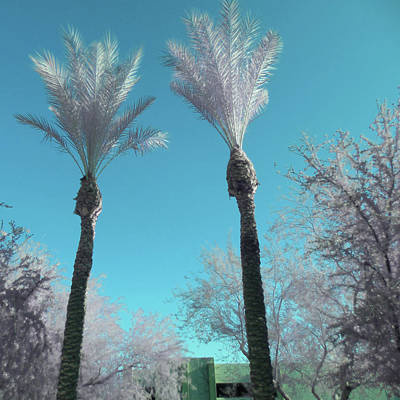 Photograph - Silver Palms 1 by Paulette B Wright