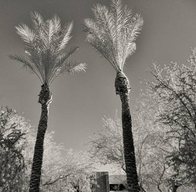 Photograph - Silver Palms by Paulette B Wright