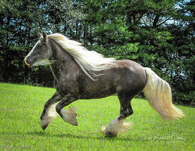 Gypsy Cob Photograph - Silver Reign Wow by Terry Kirkland Cook