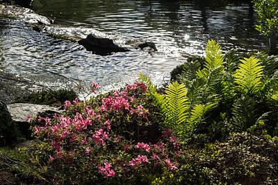 Photograph - Silver River Wild Rhododendrons And Bright Green Ferns by Georgia Mizuleva