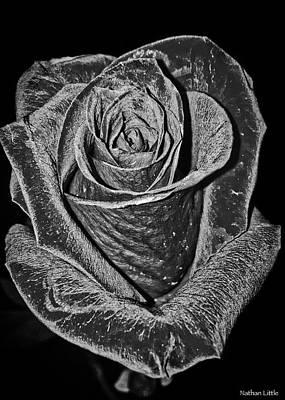 Silver Rose Art Print
