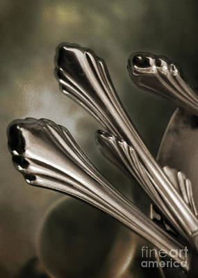 Photograph - Silver Sprouts by John Anderson