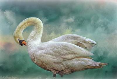 Photograph - Silver Swan by Wallaroo Images