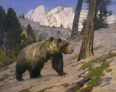 Kodiak Painting - Silver Tip Grizzly Bear - Rocky Mountains, Alberta by Rungius Carl