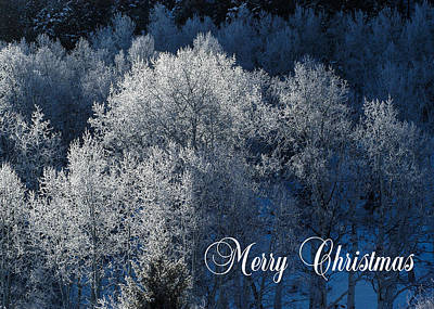 Photograph - Silver Trees Christmas Card by Roy Kastning