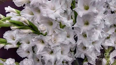 Photograph - Silver White Gladiolas 2 by Joan-Violet Stretch