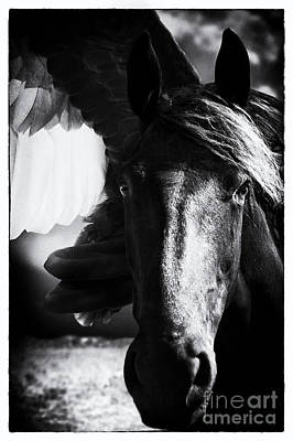 Wall Art - Photograph - Silver Wing Pegasus by Kent Miklenda