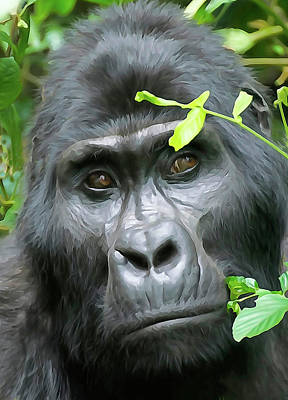 Photograph - Silverback by Dennis Cox Photo Explorer