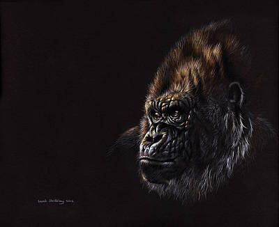 Oil Portrait Drawing - Silverback Gorilla by Sarah Stribbling