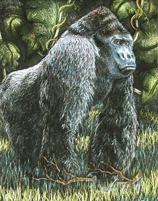 Fuqua - Artwork Drawing - Silverback-king Of The Mountain Mist by Beverly Fuqua