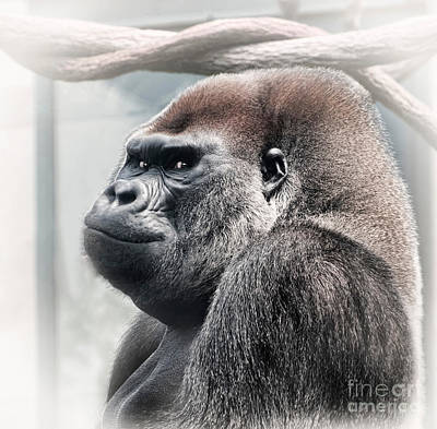 Photograph - Silverback Lowland Gorilla Checking You Out by Linda Matlow