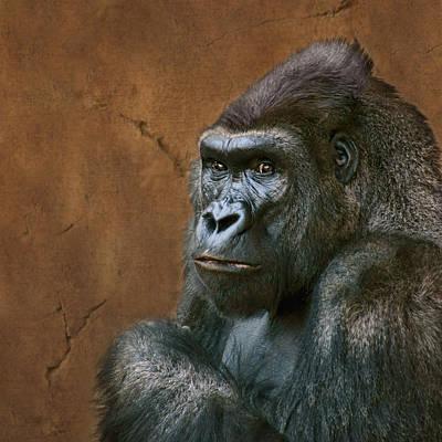 Photograph - Silverback Stare - Gorilla by Nikolyn McDonald