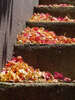 Photograph - Silverlake Steps by Gia Marie Houck